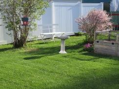Today's Backyard